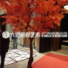 高端仿真假绿植物大型中日式红枫树家居茶室展厅店